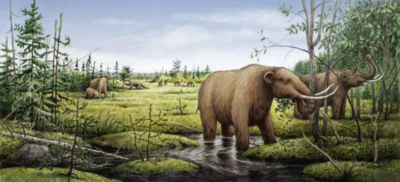 La extinción de los mamuts cambió los paisajes de Norteamérica