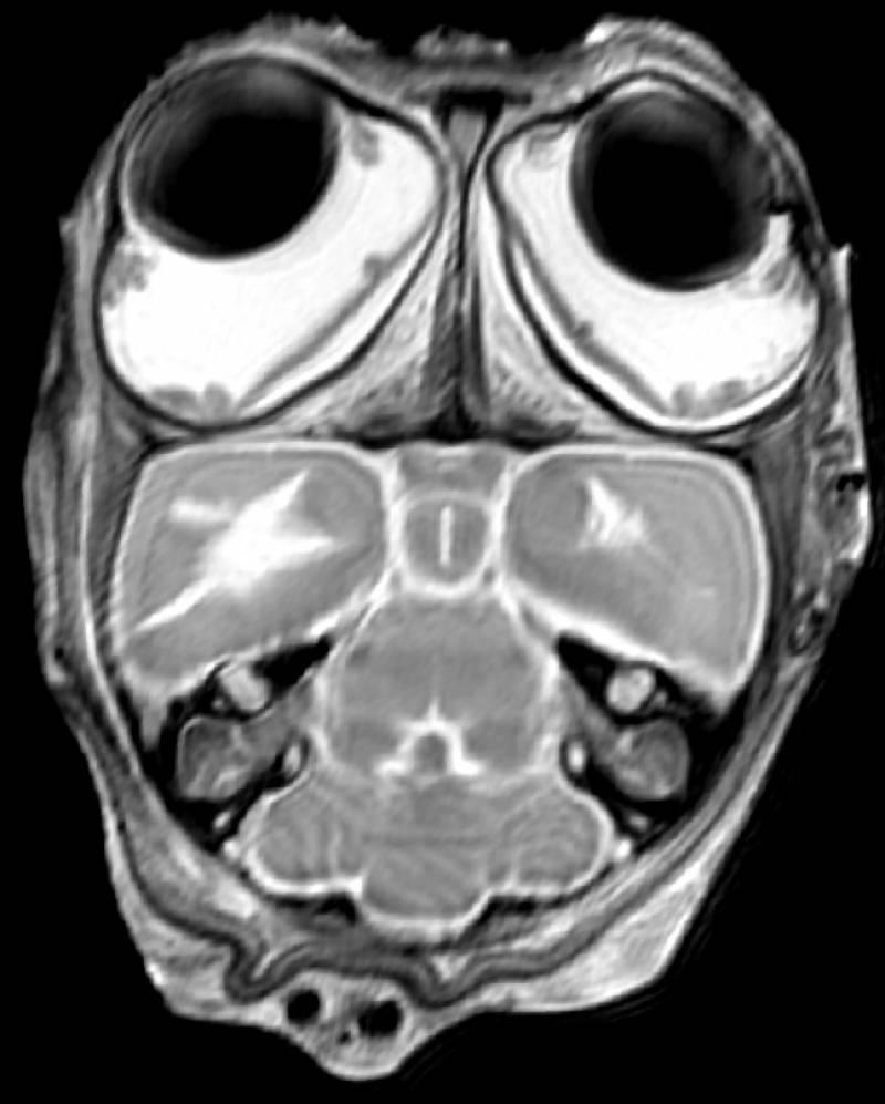 La posición de los ojos de los mamíferos les permite ser más rápidos y ágiles