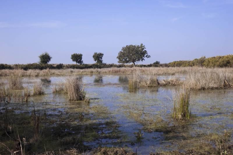 Charca temporal en Doñana