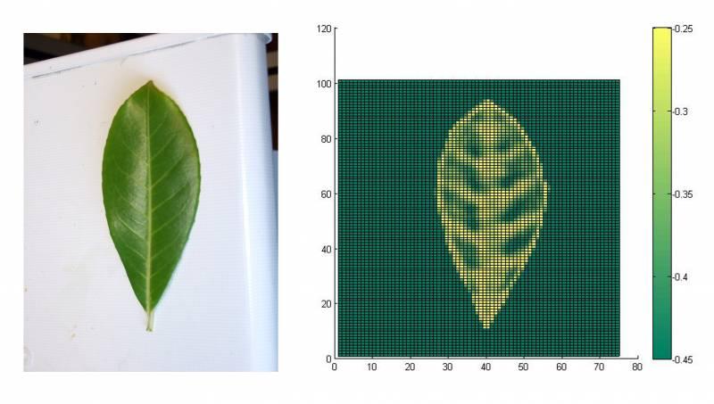 Las hojas susurran sus propiedades por ultrasonidos