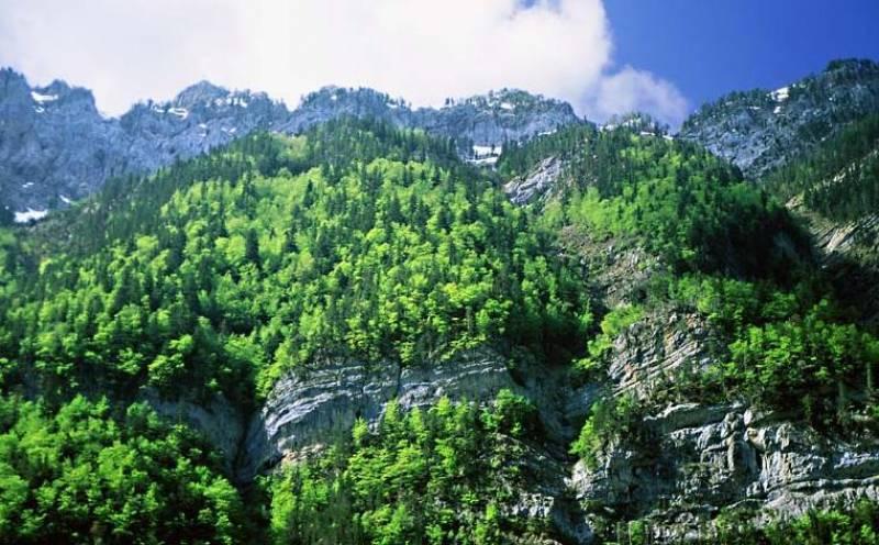 Presentan el Libro Verde sobre protección de bosques en la UE ante la mirada crítica de los ecologistas
