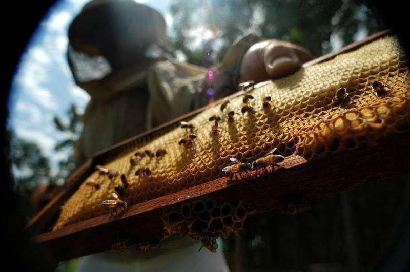 Publican un manual sobre la apicultura ecológica en España