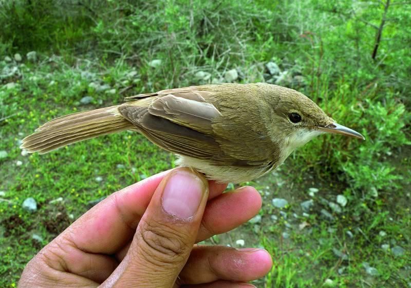 Redescubren el ave más desconocida del mundo