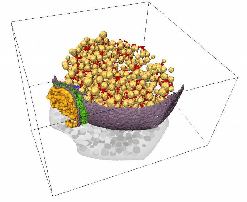 Visualizan en 3D las conexiones neuronales