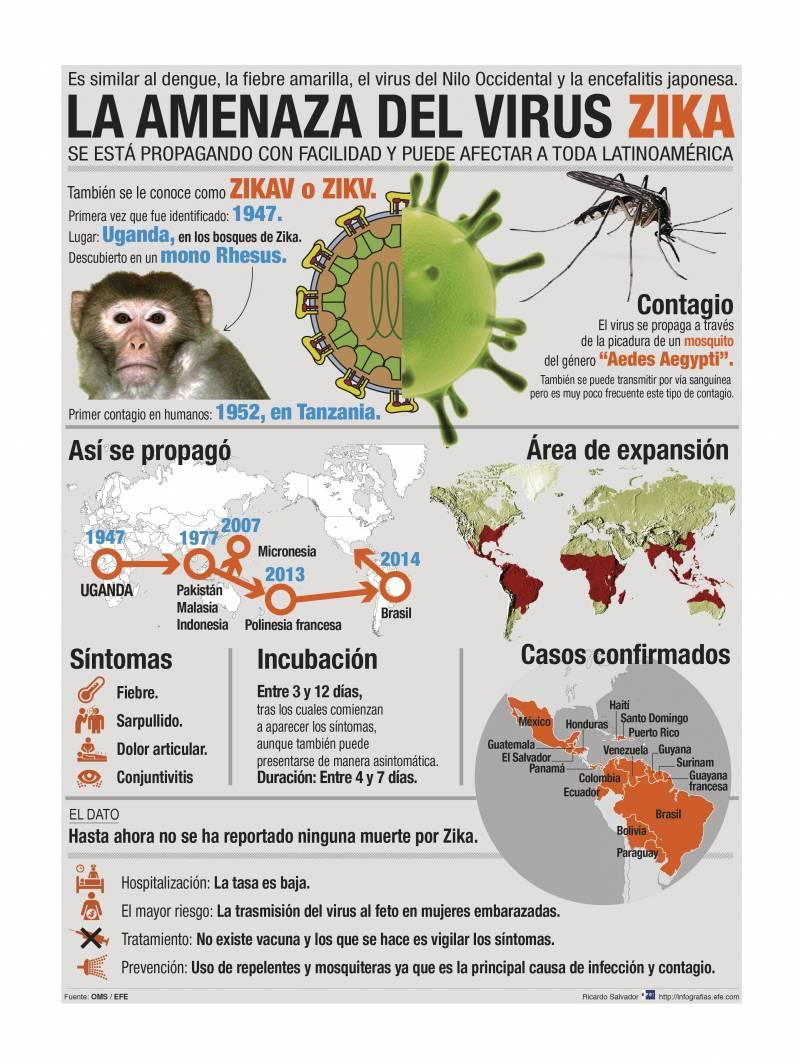 Infografía del virus zika. / Efe