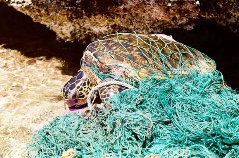 Tortuga atrapada en una red
