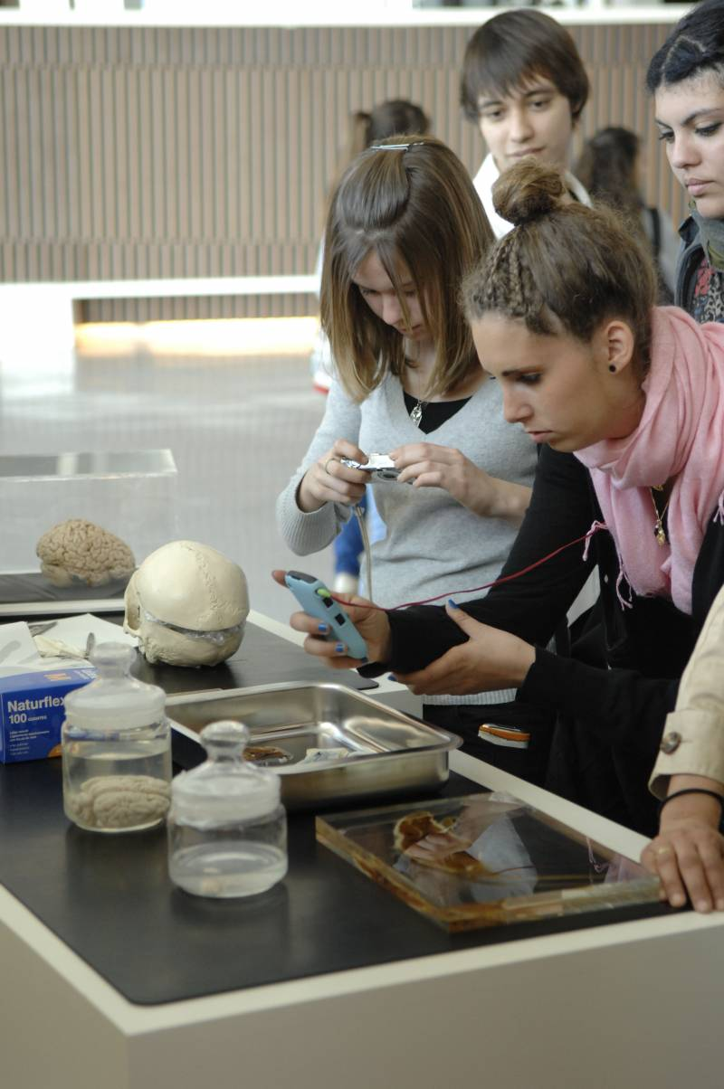 Estudiantes fotografían un cerebro plastinado.