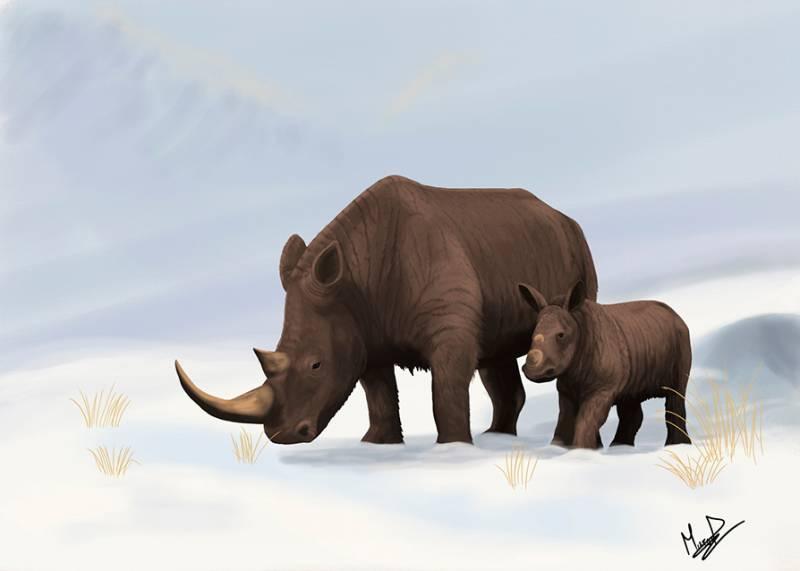 Ilustración de dos rinocerontes lanudos expuesta en el I Encuentro de Paleoarte. / Marco Ansón.
