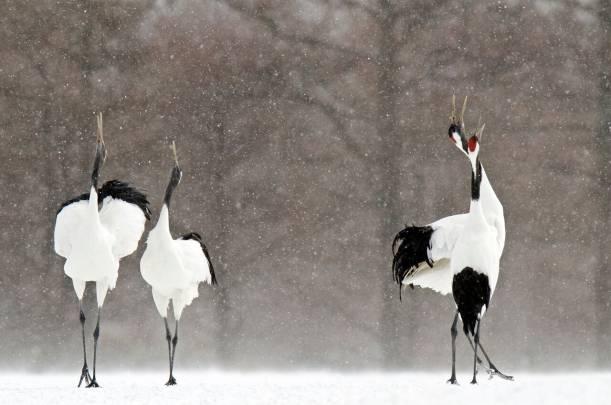 Las aves alertan del peligro existente para especies y hábitats alrededor de todo el mundo./ David Crane