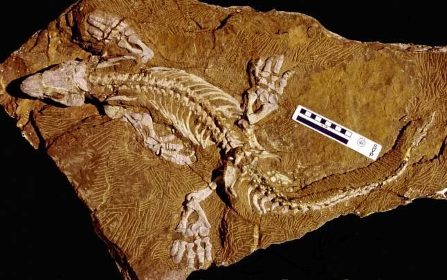 Fósil de Orobates