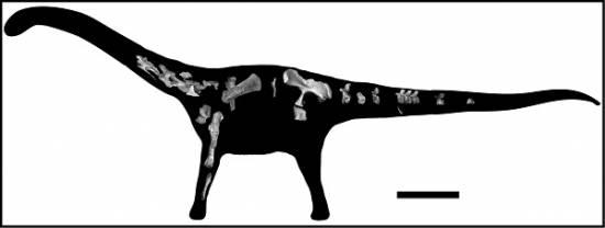 Esta imagen muestra las piezas del esqueleto recuperado de Rukwatitan bisepultus dentro de una silueta del animal. / Eric Gorscak, la Universidad de Ohio.