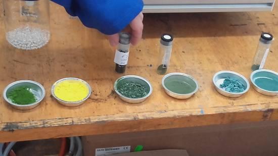 Diferentes tipos de algas utilizados para los estudios / Sinc