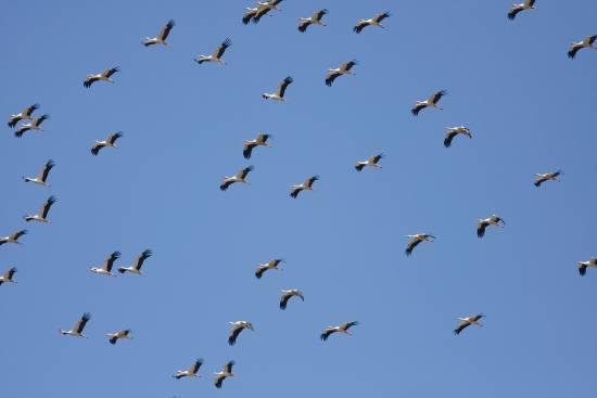 Cigüeñas en el estrecho / © John Wright