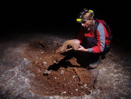Cráneo de osos cavernario / Andrei Posmoșanu