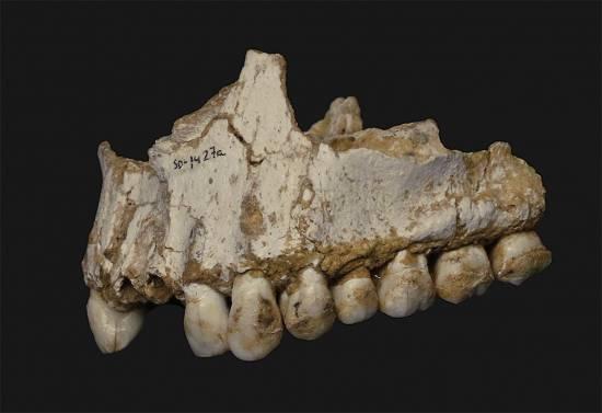 Mandíbula neandertal encontrada en el Sidrón / Andrés Díaz (CSIC)