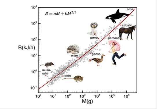 Relaciones empíricas entre el metabolismo basal y la masa corporal para diferentes animales / Fernando J. Ballesteros et al
