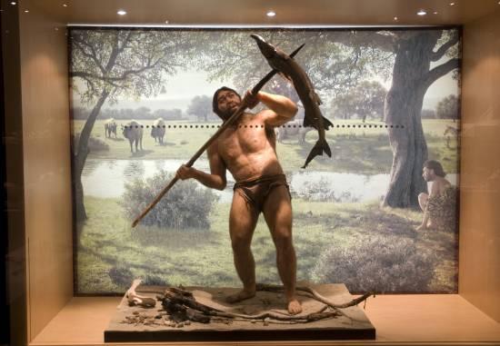 Homo erectus / MNCN