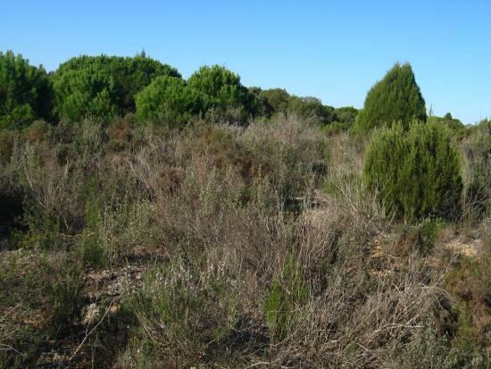 Ejemplos de los suelos en zonas de sabinar y matorral estudiados en Doñana. / Francisco Lloret