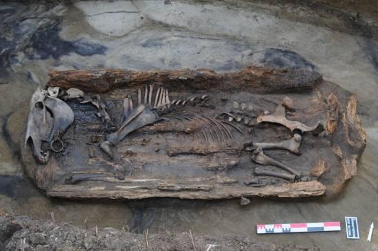 Tumba de caballo excavada en el yacimiento de Boulgouniakh, distrito de Suntarsky, Yakutia / Patrice Gérard.