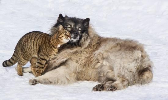 La colaboración entre diferentes especies puede indicar un beneficio mutuo / Pixabay