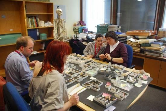 Los investigadores Simon Parfitt del University College de Londres (primera línea a la izquierda), Silvia Bello del Museo de Historia Natural de Londres (segunda línea, en la izquierda de la imagen) al lado de Isabel Cáceres (IPHES) y Palmira Saladié (de espaldas). / IPHES