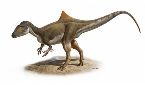 """Reconstrución del aspecto en vida del dinosaurio carnívoro Concavenator corcovatus (""""el cazador jorobado de Cuenca"""") / Raúl Martín"""