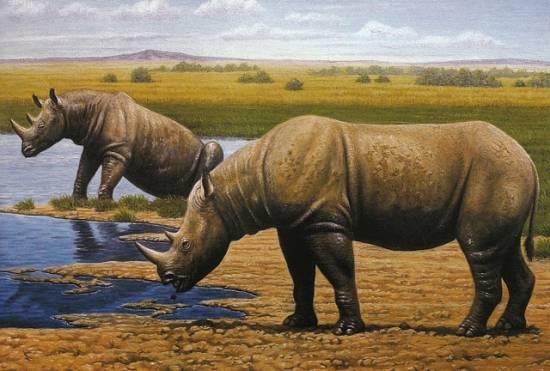 Reconstrucción artística del rinoceronte en su ambiente / Mauricio Anton