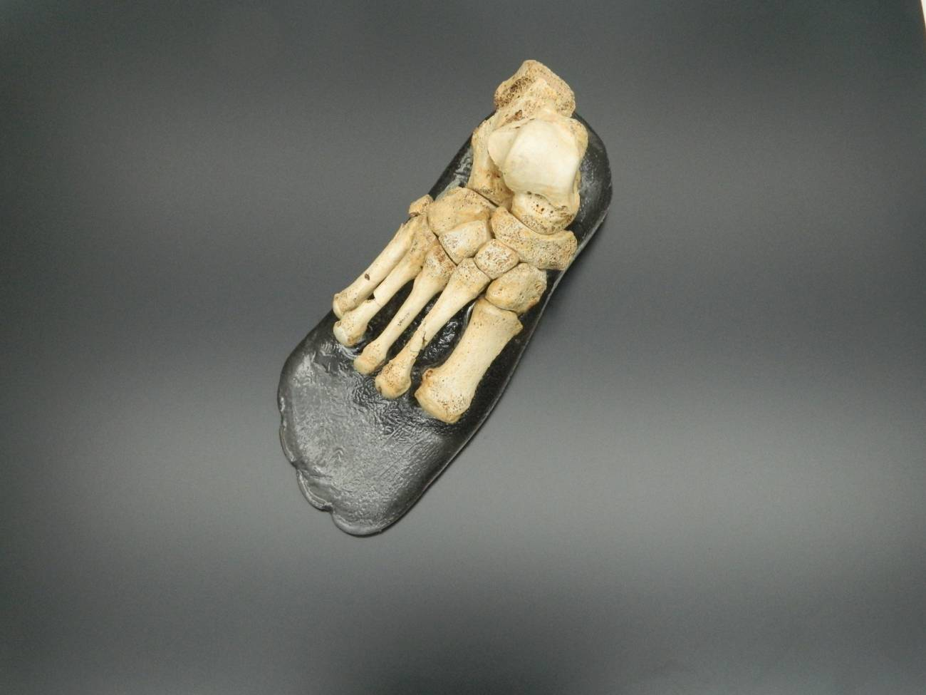 Se estima que el pie podría tener una antigüedad de medio millón de años. / MEH