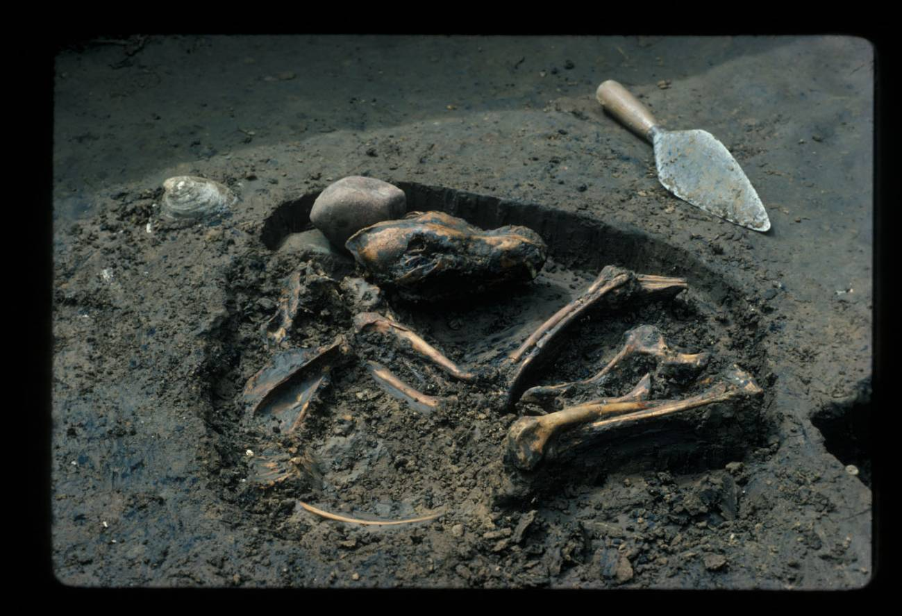 Fósiles de perros antiguos en Europa. / Del Baston