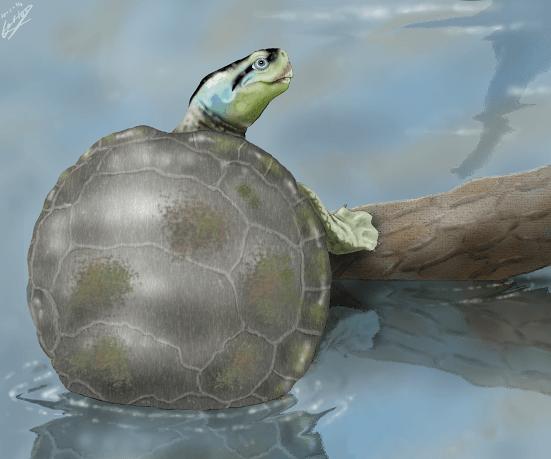 Ilustración de 'Hylaeochelys kappa', una tortuga con costumbres nadadoras / Carlos de Miguel Chaves