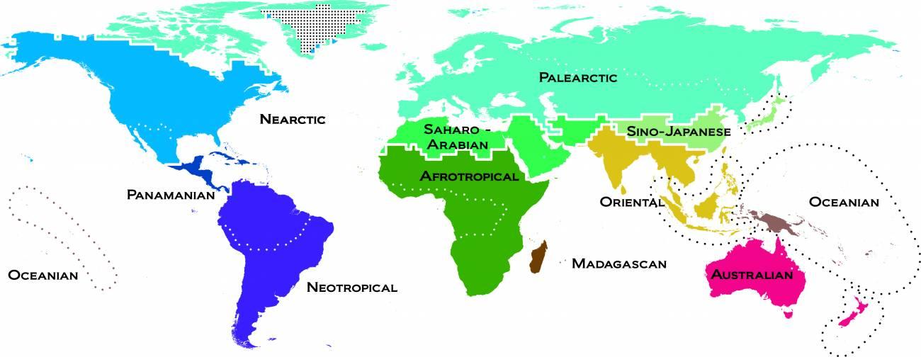 Mapa moderno de los vertebrados en el mundo. Los colores de los reinos reflejan la singularidad de los animales. Las regiones que tienen tonos similares indican que sus especies son muy parecidas y los que son muy diferentes indican lo contrario. Imagen: AAAS Science.