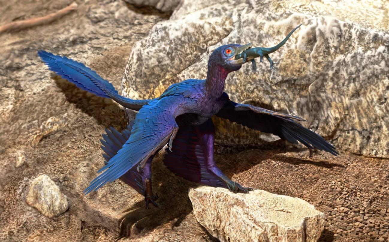 Ilustración del Microraptor que se traga lagarto