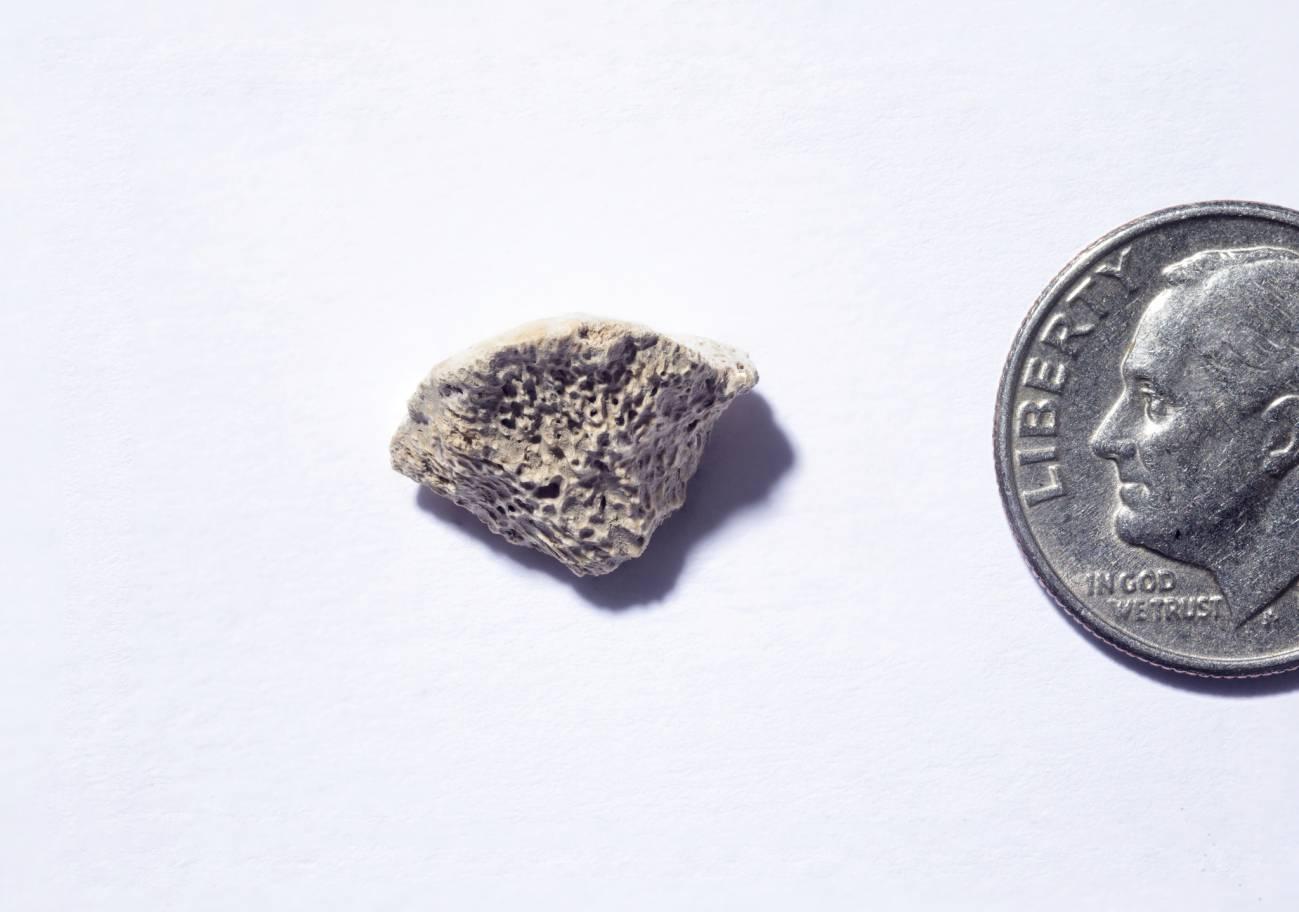 Fragmento de hueso que pertenece a un perro que vivió hace unos 10.150 años. / Douglas Levere / University at Buffalo
