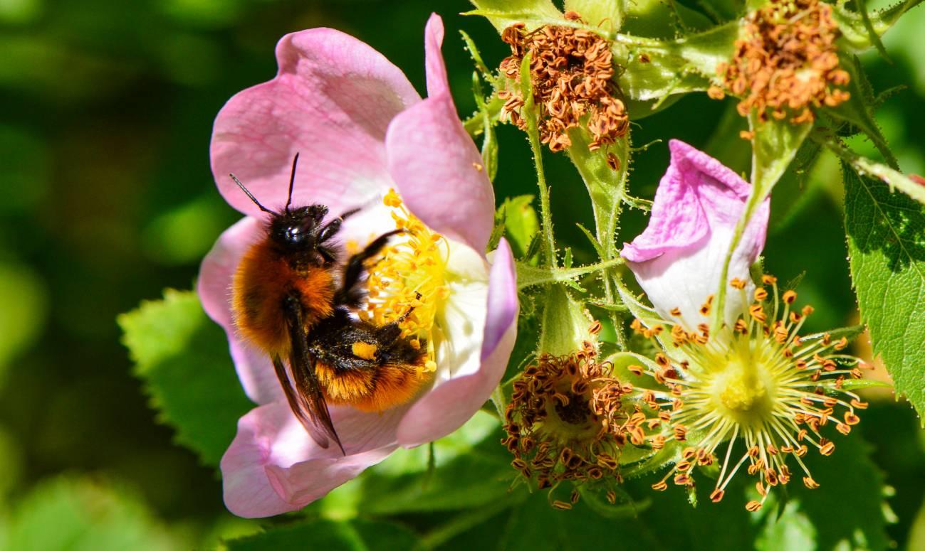 abeja flor