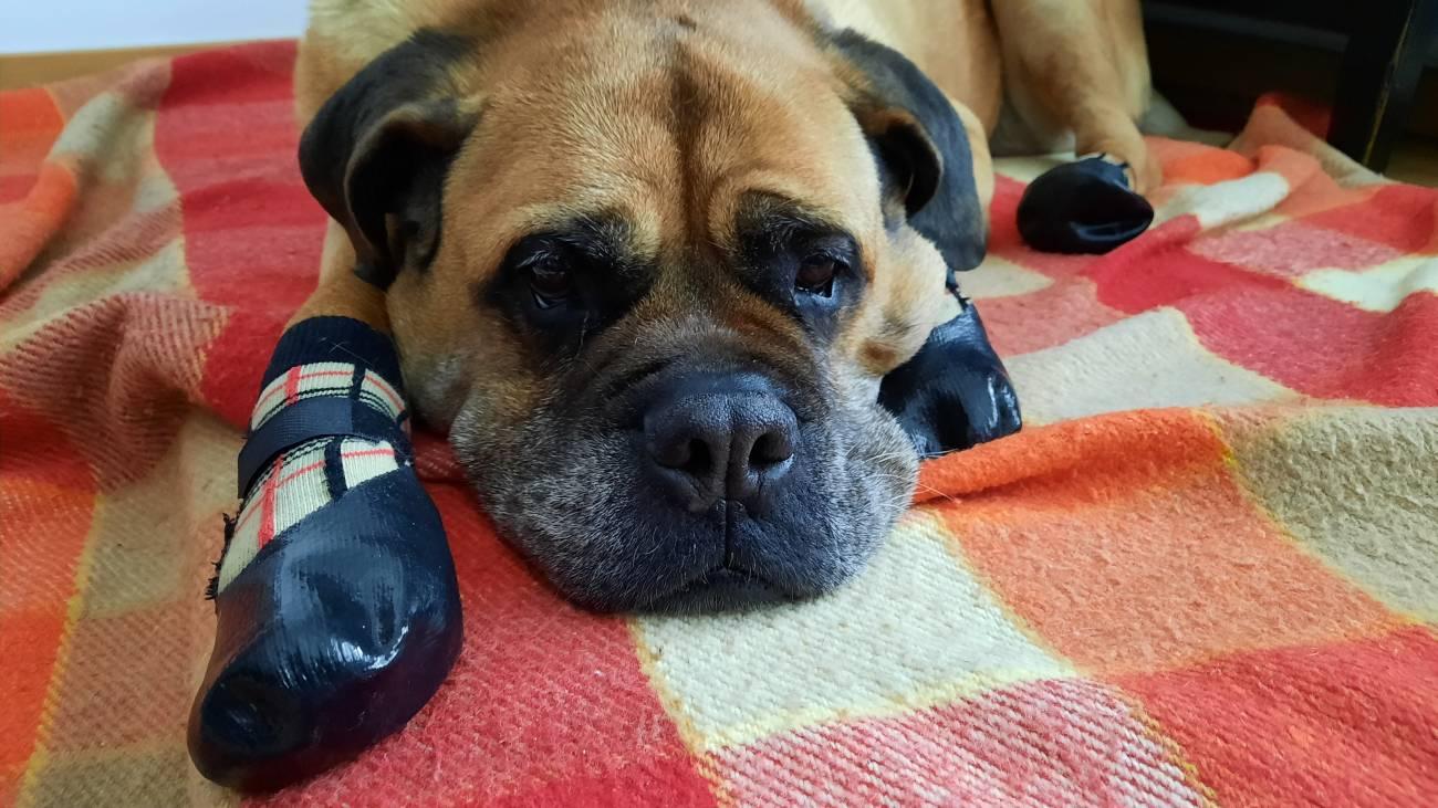 20210108 105201 - Consejos para que las mascotas no sufran con el frío extremo