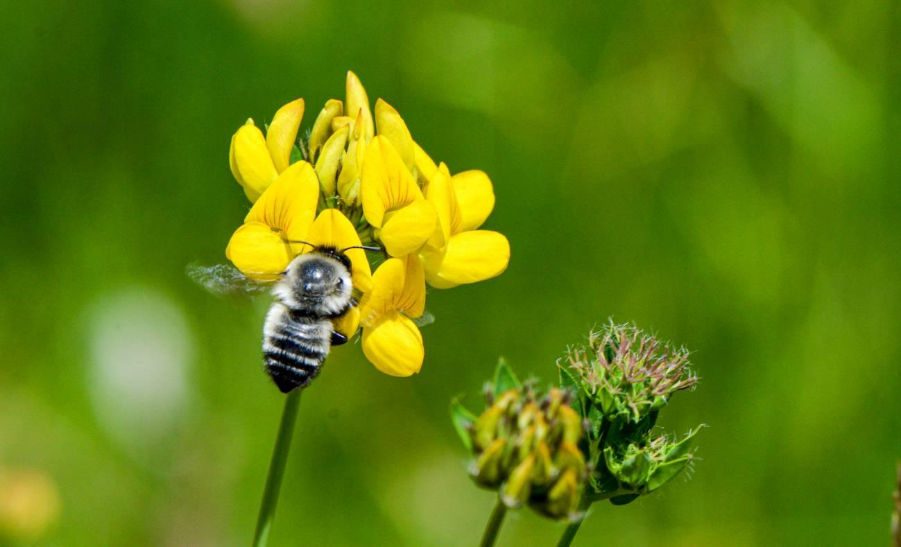 polización abejas zattara