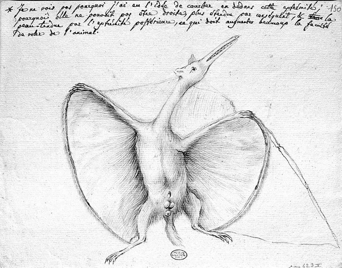 """Primer fósil documentado de pterosaurio. El naturalista francés Georges Cuvier lo llamó en 1809 """"ptéro-dactyle"""" (""""dedo alado"""") / Carnegie Museum of Natural History"""