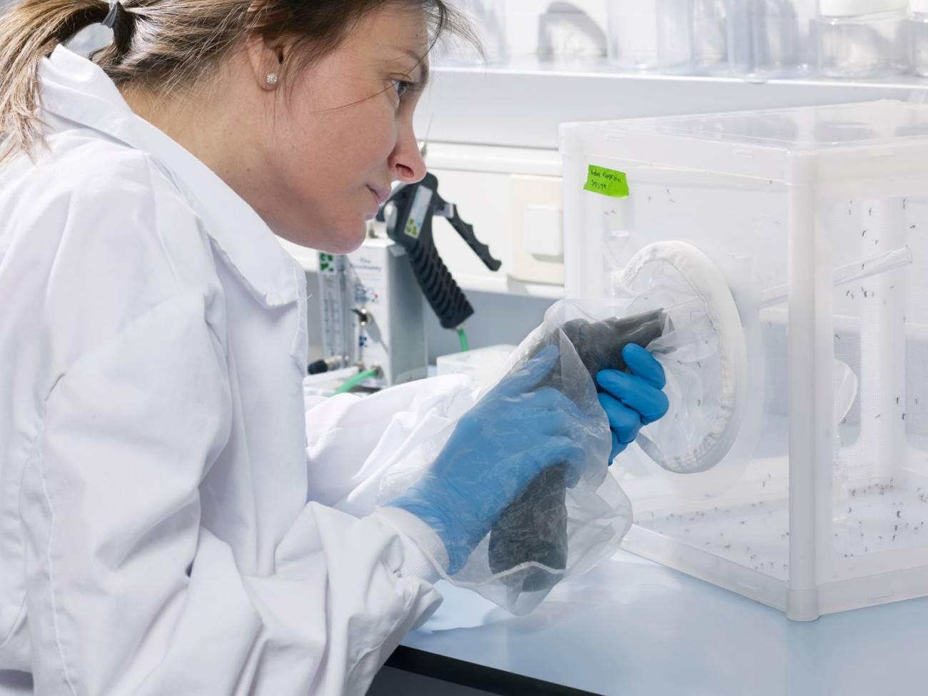Laboratorio Entomología IRTA-CReSA. / IRTA