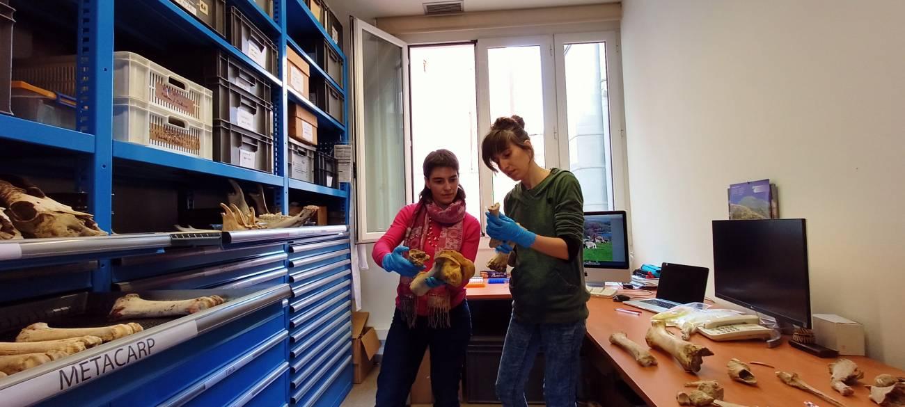 Ariadna Nieto Espinet  y Silvia Valenzuela Lamas en el laboratorio de arqueozoología de la Institució Milà i Fontanals./ Lydia Gallego Barco