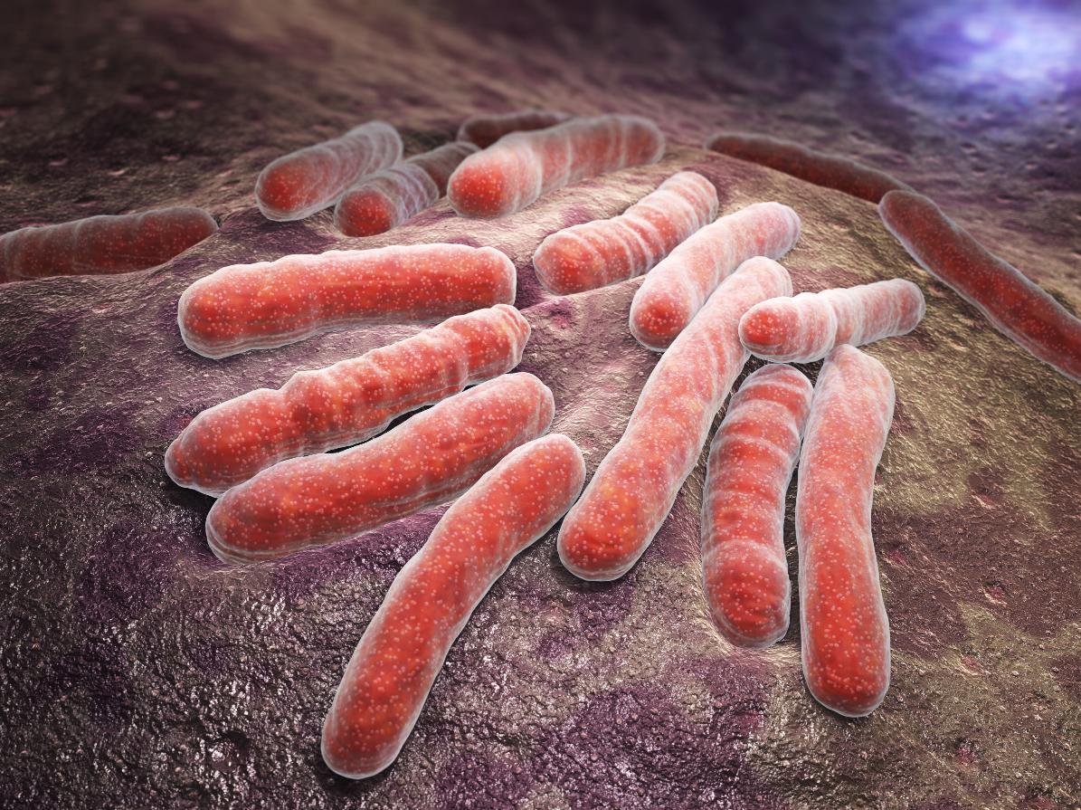 bacteria tuberculosis