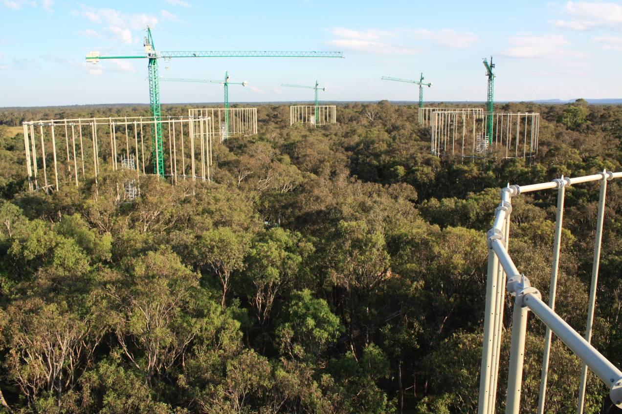Vista aérea del experimento realizado en el bosque australiano