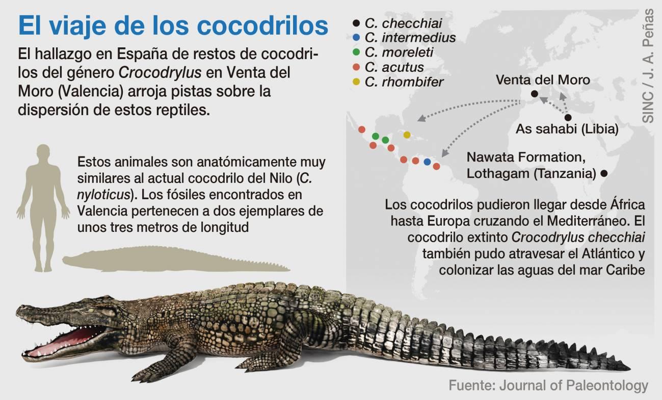 Cocodrilo - Cocodrilos africanos vivieron en Valencia hace 6  millones de años