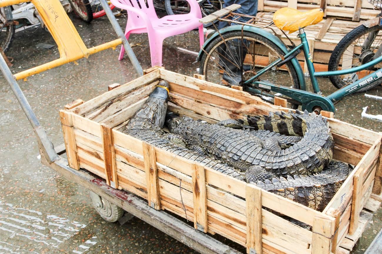 Típico comercio de peces y cocodrilos en Guangzhou, China