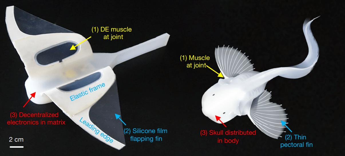 robot pez caracol