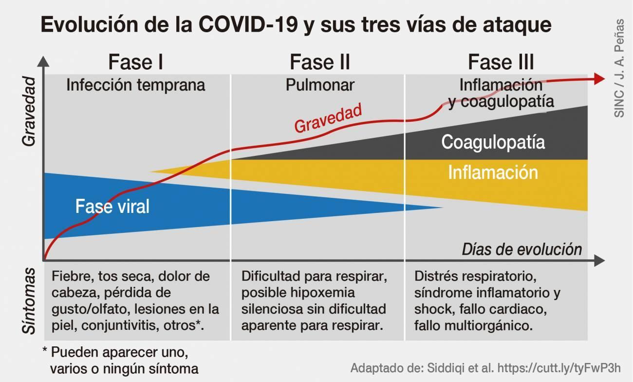 fases de la infección
