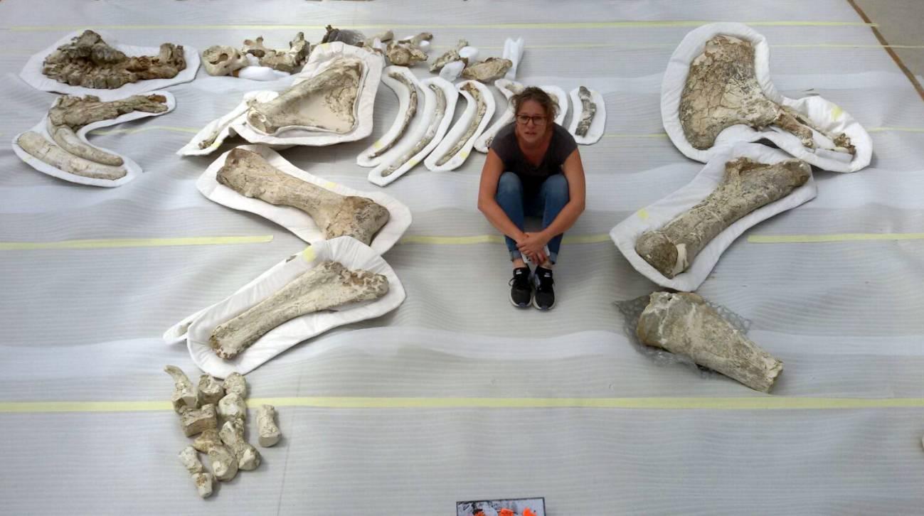 Esqueleto parcial de dinoterio