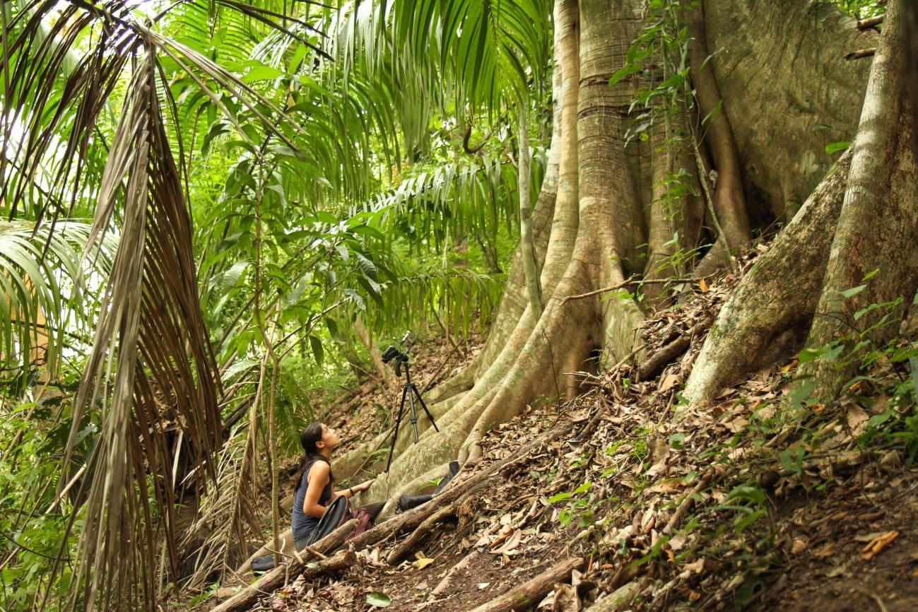 A.A. Fernández grabando el balbuceo de las crías salvajes de Saccopteryx bilineata en su refugio diurno en Costa Rica./ Michael Stifter