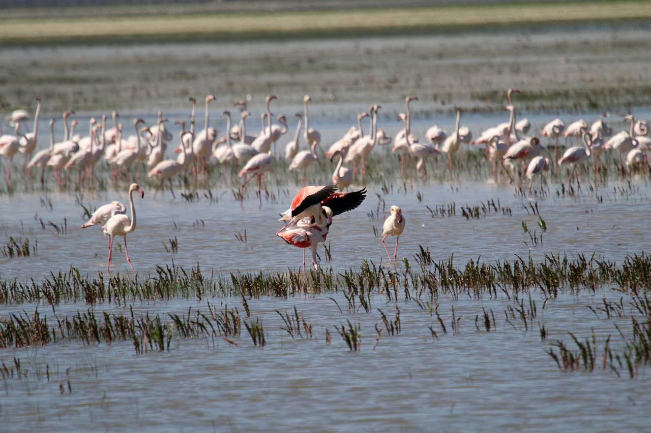 Parque Nacional de Doñana. / Pixabay
