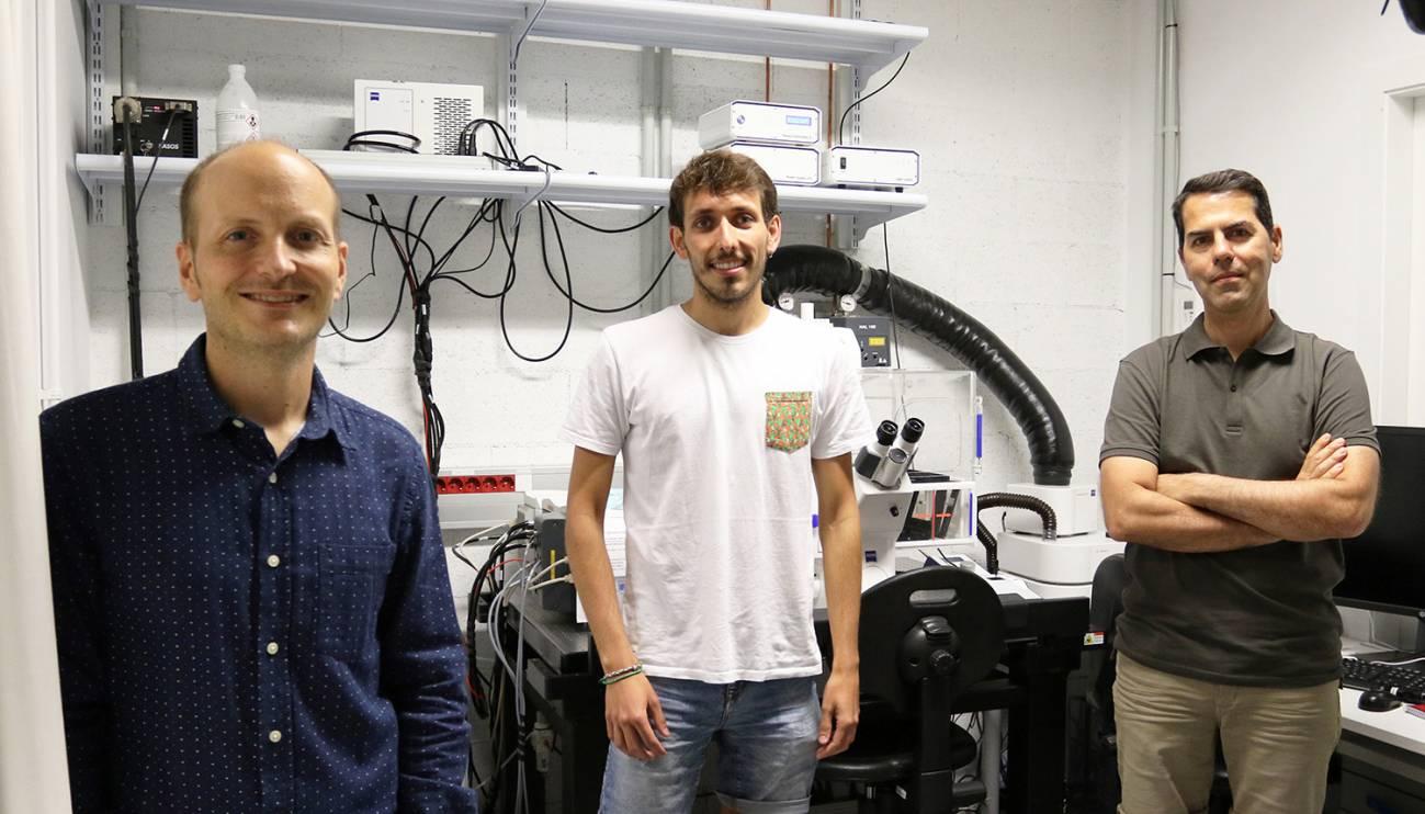 foto grup 2 - Investigadores del Instituto de Bioingeniería de Cataluña descubren cómo se pliega y mueve la pared del intestino midiendo sus fuerzas