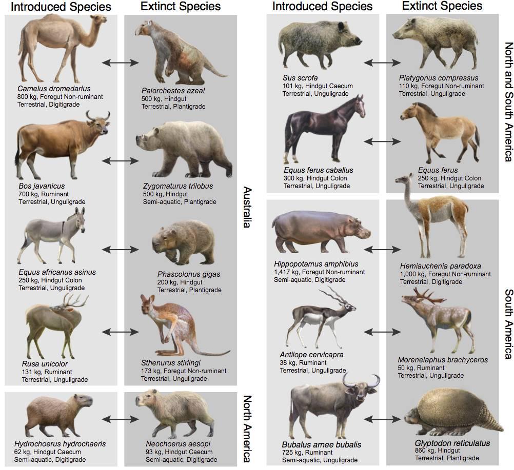 Comparación de herbívoros actuales y extintos